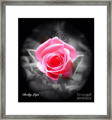 Perfect Rosebud In Black Framed Print by Becky Lupe
