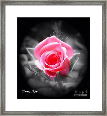Perfect Rosebud In Black Framed Print