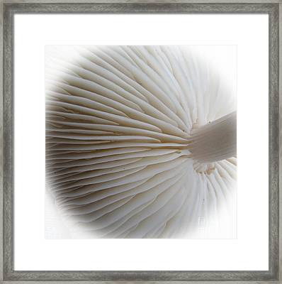 Perfect Round White Mushroom Framed Print by Tina M Wenger