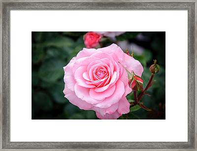 Perfect Framed Print by Roxy Hurtubise