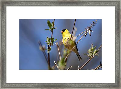 Perfect Shade Of Yellow Framed Print by Lori Tambakis