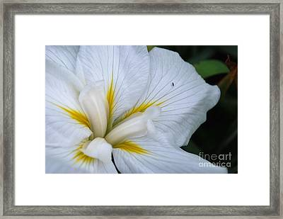 Perfect Framed Print