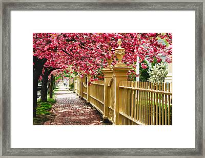 Perfect Time For A Spring Walk Framed Print
