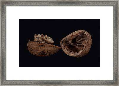 Perfect Walnut Framed Print