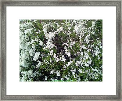 Perfect White Spring Blossoms Framed Print by PainterArtist FIN