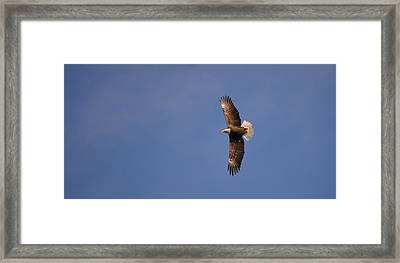 Perfected Flight Framed Print