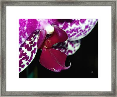 Perfection Framed Print by Barbara Middleton