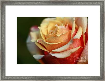 Perfection Framed Print by Inspired Nature Photography Fine Art Photography