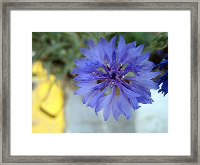 Perfection Framed Print by Mike Podhorzer