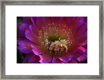 Perfectly Pink  Framed Print by Saija  Lehtonen
