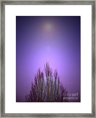 Framed Print featuring the photograph Perfectly Purple by Chris Anderson