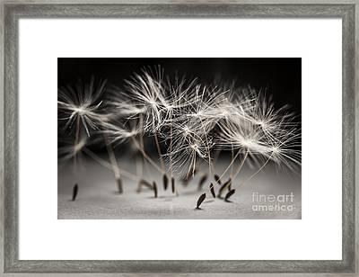 Performance Framed Print by Elena Elisseeva