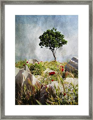 Pergamum's Tree Framed Print
