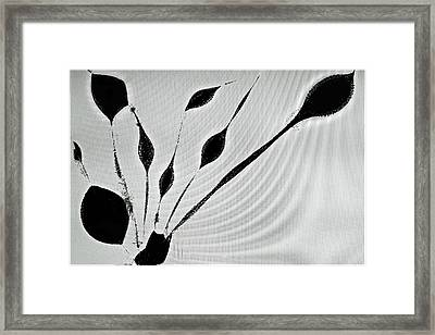 Framed Print featuring the photograph Perhaps A Plant by Geraldine Alexander
