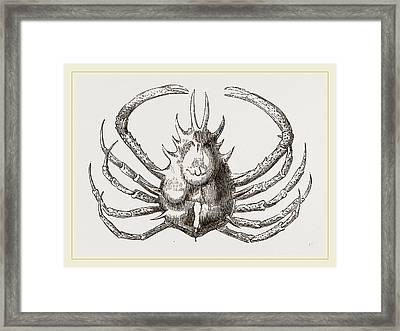 Pericera Cornuta Framed Print by Litz Collection