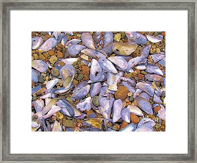 Periwinkles Muscles And Clams Framed Print