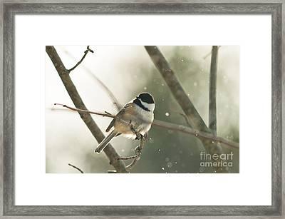 Perky Bird Framed Print