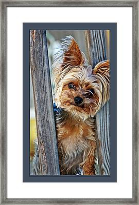 Perky Pup Framed Print by Donna Proctor