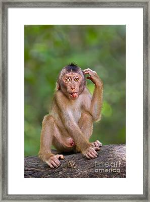 Perplexed Framed Print by Ashley Vincent