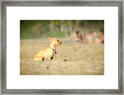 Perro Feliz In Riviera Nayarit Framed Print by Amy Fearn