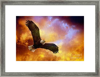 Perseverance Framed Print by Lois Bryan
