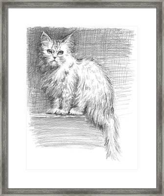 Persian Cat Framed Print by Sarah Parks