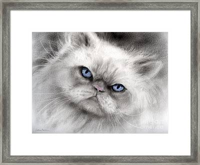 Persian Cat With Blue Eyes Framed Print