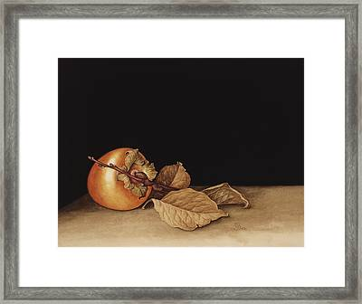 Persimmon Framed Print by Jenny Barron