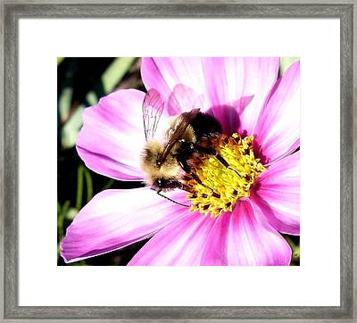 Persistence Into October Framed Print by Will Borden