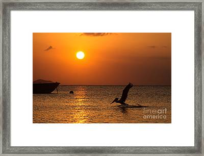 Persistent Beauty Framed Print