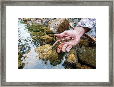 Person Hand Releasing A Small Wild Framed Print