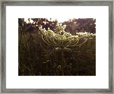 Perspective Framed Print by Lucy D