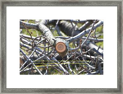 Perspective Framed Print by Sonali Gangane