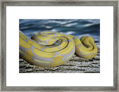 Perspective Framed Print by Steven Michael