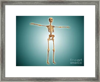 Perspective View Of Human Skeletal Framed Print by Stocktrek Images