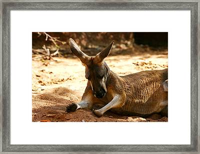 Perth - Kangaroo Framed Print by Gira Desai