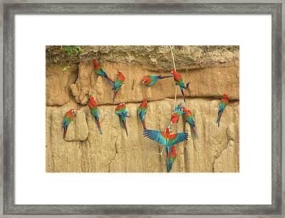 Peru, Amazon River Basin, Madre De Dios Framed Print by Jaynes Gallery