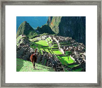 Peru, Machu Picchu, Llama Overlooks Framed Print by Miva Stock