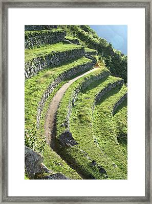 Peru, Machu Picchu Terracing Framed Print by John Ford