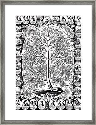 Peruvian Bark Or Jesuit Tree Framed Print by Unknown