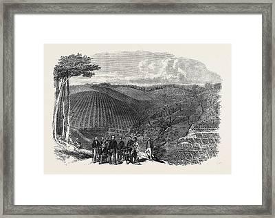Peruvian Bark Tree Plantations In The Neilgherry Hills Framed Print