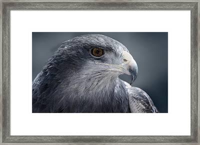 Peruvian Eagle Framed Print by Walter Iglesias