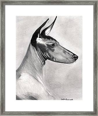 Peruvian Inca Orchid Dog Framed Print by Olde Time  Mercantile