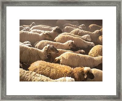 Peruvian Wool Parade Framed Print