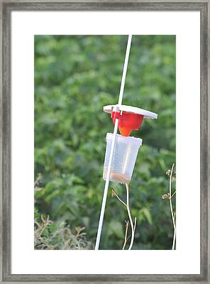Pest Trap In An Agricultural Field. Framed Print
