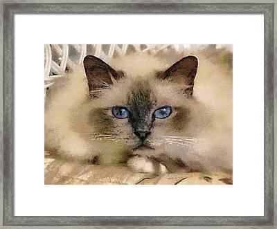 Pet Cat Framed Print