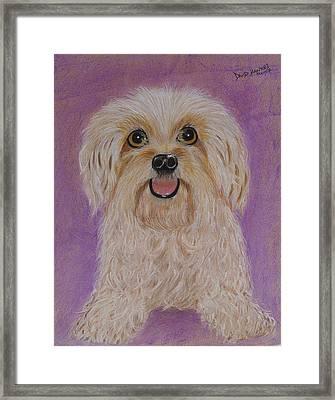 Pet Dog Framed Print by David Hawkes