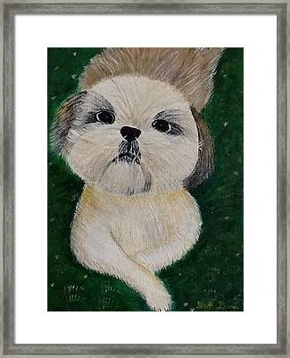 Pet Dog Framed Print by Kat Poon