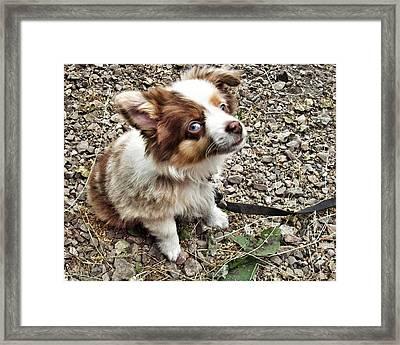 Pet Me Framed Print by Branden Simons
