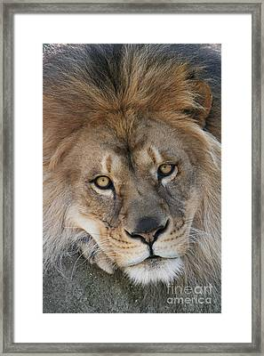 Pet Me Framed Print by Judy Whitton